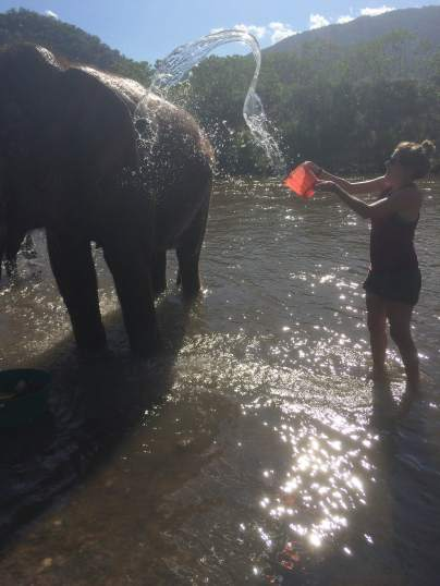 Bathing the elephant