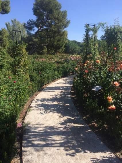 Rose Garden in Retiro Park