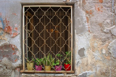 Cactus in the window