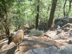 Wildlife in Samaria Gorge
